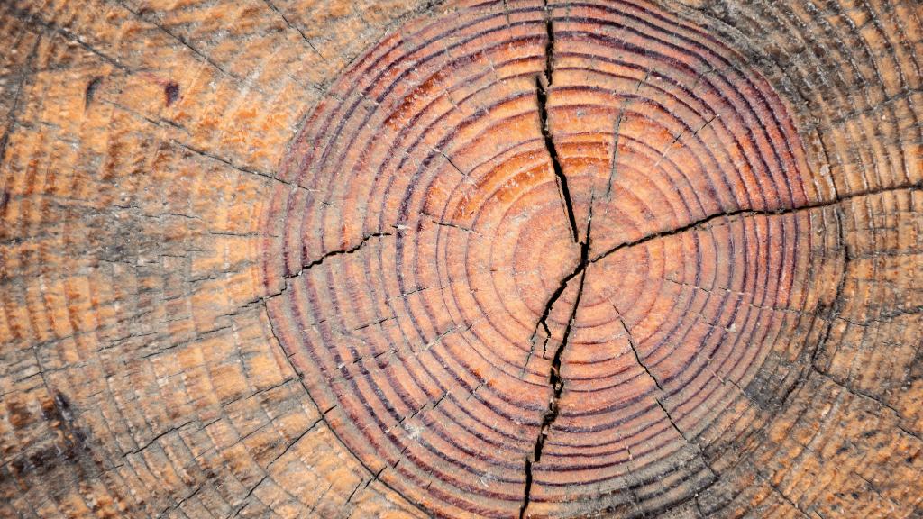 Holzforum-Online.de 2.2021 - Between tree and bark